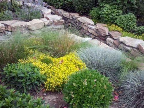 Топ-10 идеальных растений для альпийских горок