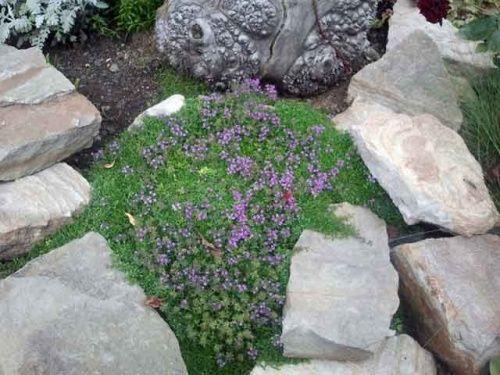 растения среди камней