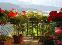 10 Nasvetov za balkonske rastline bujno cvetoče
