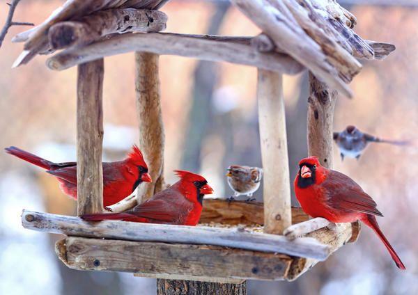 20 Отличных идей птичьих кормушек