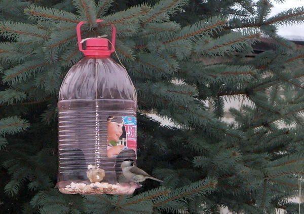 alimentatoare pasărea din sticle de plastic, cu abekker.ru fotografii site-ului