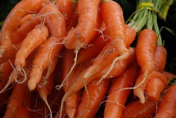 рогатая морковь
