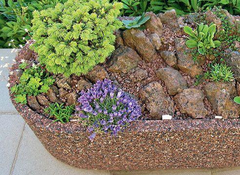 Rock vrt v posodi