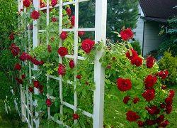 Oblouky a mřížoví na popínavé růže