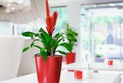 Automatické zavlažování: s rukama zvednout oázu květů