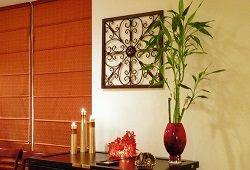 Бамбук в домашних апартаментах: от карликов до великанов