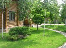 Belostvolnye breza na vrtu