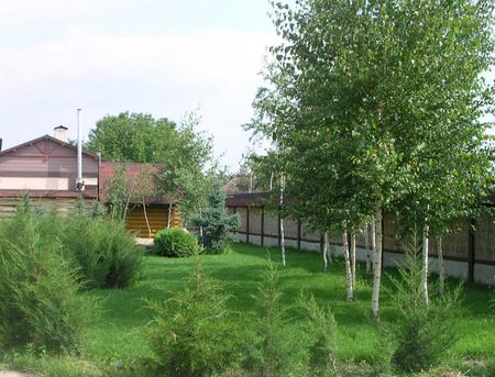 Belostvolnye breza
