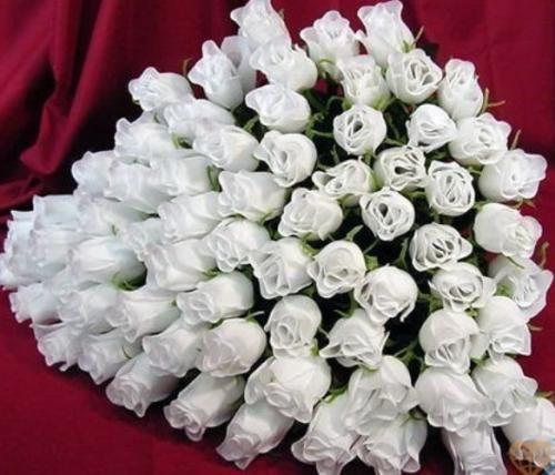 Белые розы на фото как воплощение невинности, добра и света