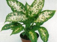 Болезни комнатных растений и цветов