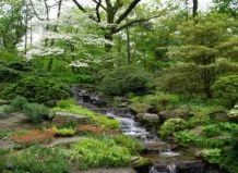 Ботанический сад нью-йорка весенняя прогулка
