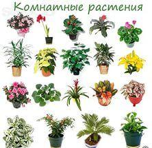 Паспорт комнатных растений: особенности составления и сферы применения
