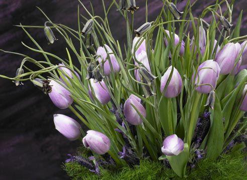 Šopek tulipanov za 8. marec
