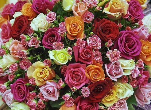 Vrtnice različnih sort