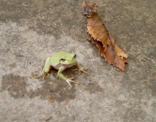 Наша лягушка