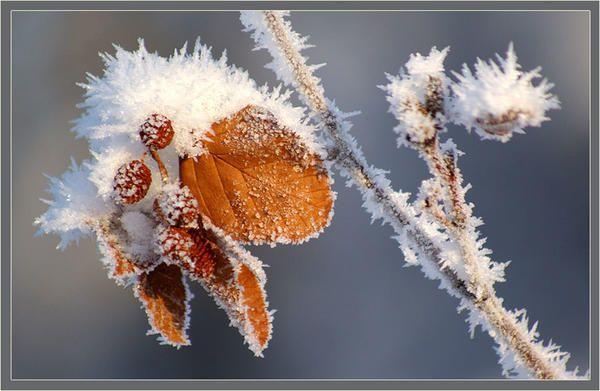 Alder zima. Fotografije iz mediasubs.ru mesta