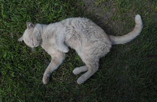 Котик.
