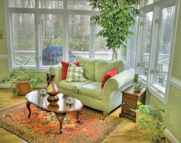 лучшие комнатные растения
