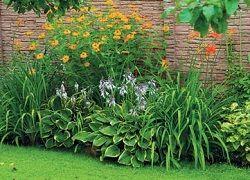 Что посадить вдоль забора: подбор многолетних растений