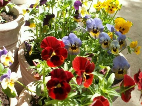 Květinové zahrady, květinové záhony a hřebeny letniček