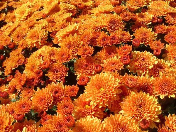 Razred Elda Orange