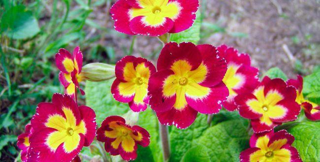 Flori în grădină sunt ca o umbră