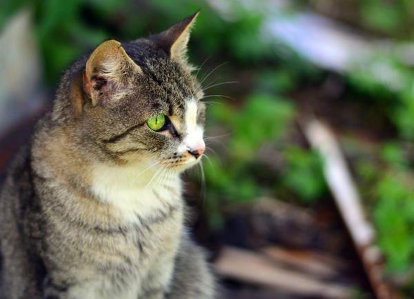 Дачный журнал кошки кэт сватовство гусара