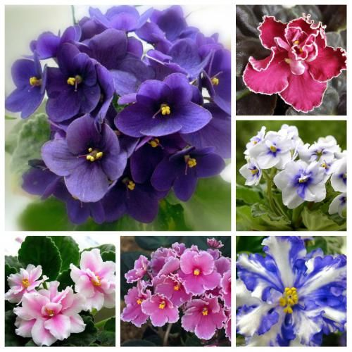Необходимая доза полива комнатных цветов