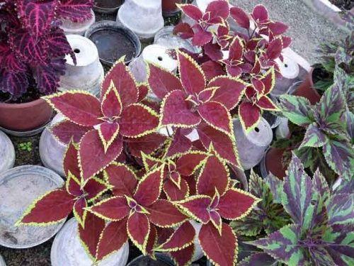 Декоративные растения с красивыми листьями
