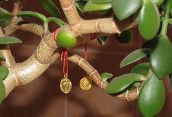 Money Tree: Feng Shui bogastvo in aktiviranje cona
