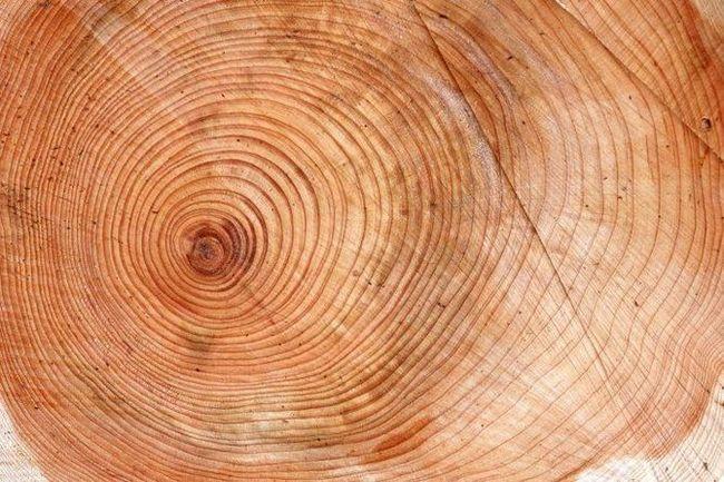 древесина очень ценится с давних времен