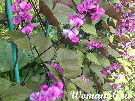 flori dolicul
