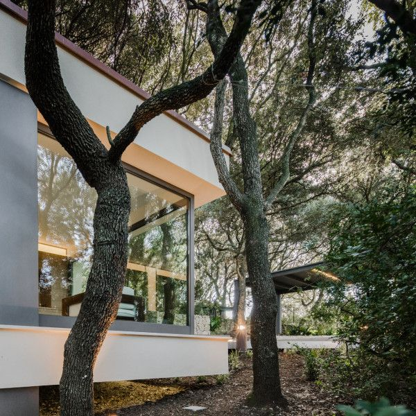 hiša v gozdu sassari5