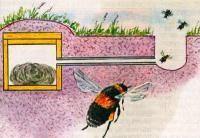 Къща за пчели