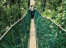 Najstarejši deževni gozd, ki jih globalno segrevanje ubil