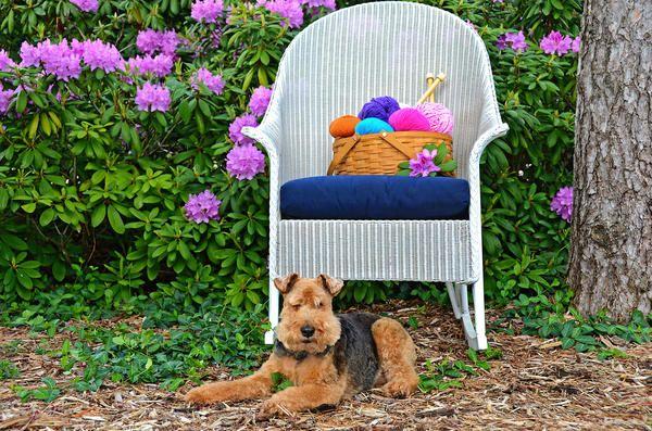 Udoben stol na vrtu
