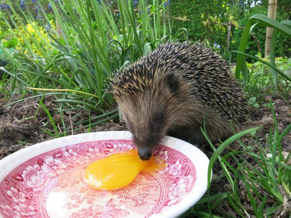 Яйца тоже подойдут