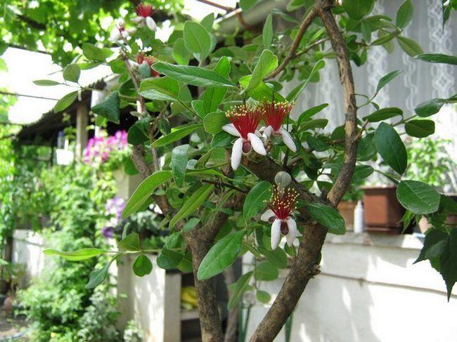 Пересадка и размножение растения