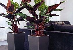 Rastline za dolgočasno pisarniške prostore: kako se pobrati in kraj?