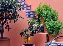 Floristične in fitosanitarna design, cvetlični okras v notranjosti - na fitosanitarna vašem vrtu