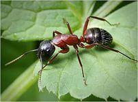 как да се отървем от мравки