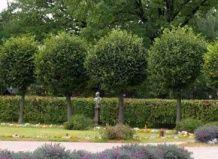 V obliki drevesa v vrtu