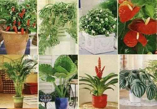 Фото цветущих комнатных растений в интернете