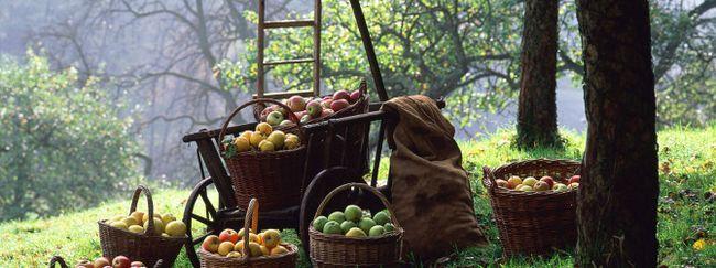 Фруктовый сад по фен-шую