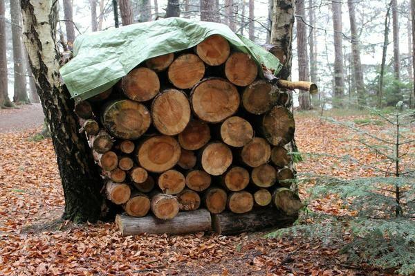 Les za kurjavo je potrebno zavetje pred slabim vremenom