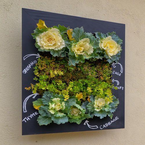 Настенный огород-панно. Фото с сайта http://houzz.com/