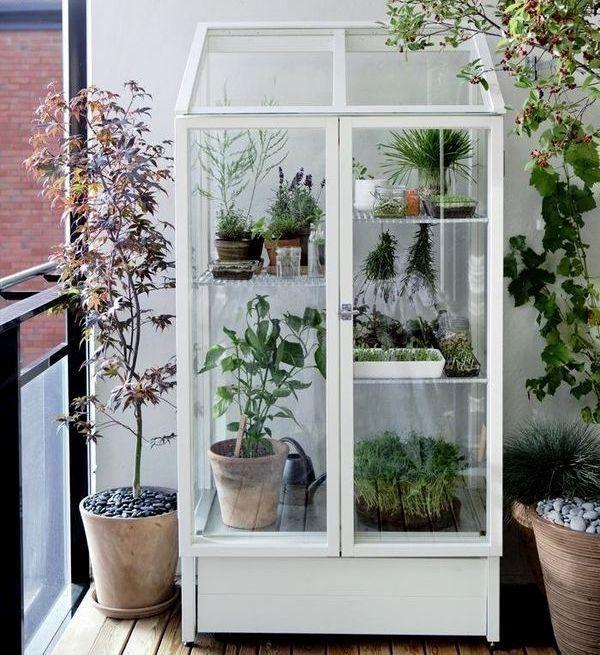 Оранжерея в витринном шкафу. Фото с сайта http://gardenista.com