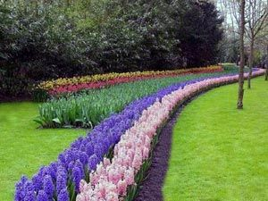 Pridelovanje Hyacinth House