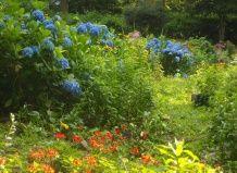 Группы красивоцветущих кустарников