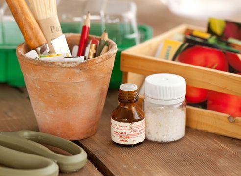 Semena, zdravila, sajenje
